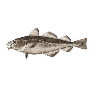 Salted fish 250g jamaican products for Jamaican butter fish